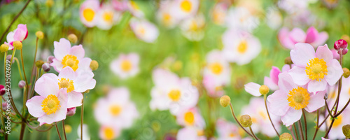 Photo Panoramic Nature summer floral Background