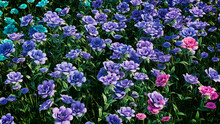 Multicolored Flower Background. Floral Wallpaper With Turquoise, Purple And Pink Roses. 3D Render