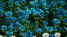 Multicolored Flower Background. Floral Wallpaper With Teal Roses. 3D Render