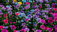 Multicolored Flower Background. Floral Wallpaper With Pink, Purple And Blue Roses. 3D Render