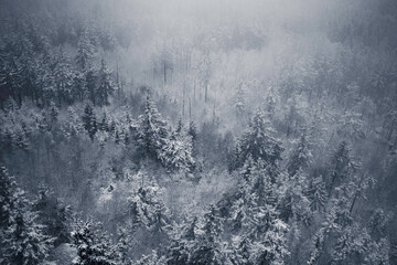 Drzewa za mgłą