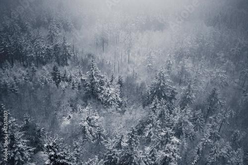 Obraz Drzewa za mgłą - fototapety do salonu