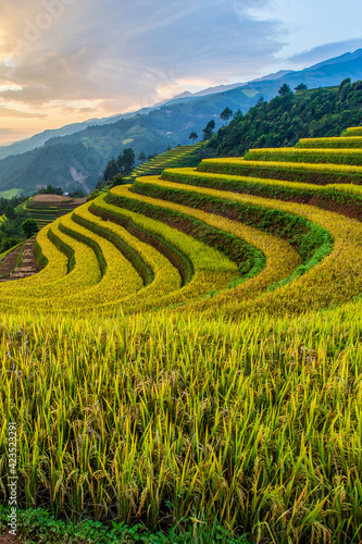 Green terraced rice fields in rainny season at Mu Cang Chai