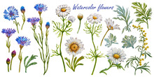 Watercolor Flowers From Cornflowers, Daisies And Clover