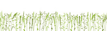 Green Grass Isolated On White - Seamless Border With Natural Herbs - Row Of Wild Herbs - Herbal Silhouettes For Spring And Summer Design