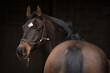 canvas print picture - Pferdeportrait vor dunklem Hintergrund