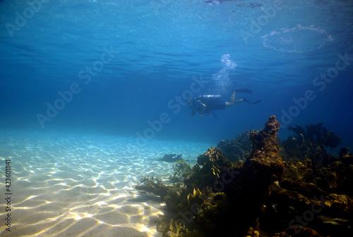 scuba diver , coral reef , caribbean sea , Venezuela Fotobehang