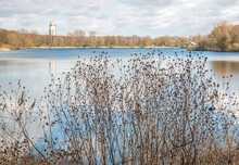 Silhouettes Of Dry Burdock Plants With Hooked Burrs At The Edge Of A Smal Lake. It Is A Cloudy Day In The Beginning Of The Dutch Spring Season.