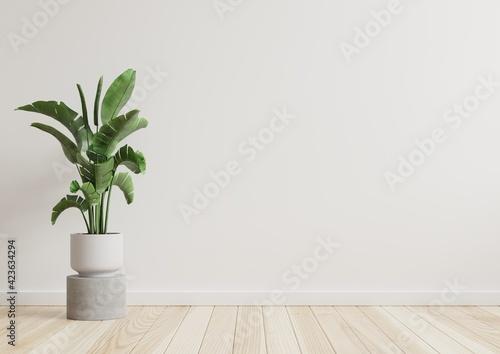 Fotografía Empty room white walls with beautiful plants sideways on the floor