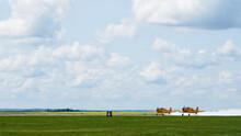 Harvard Planes Taking Off On The Runway.