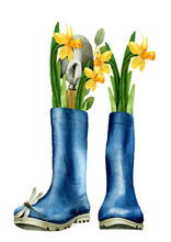 Watercolor Illustration With Blue Boots With Yellow Flowers Daffodils And A Dragonfly On Them