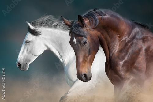 Fotografia, Obraz Two horse with long mane in motion against dark background