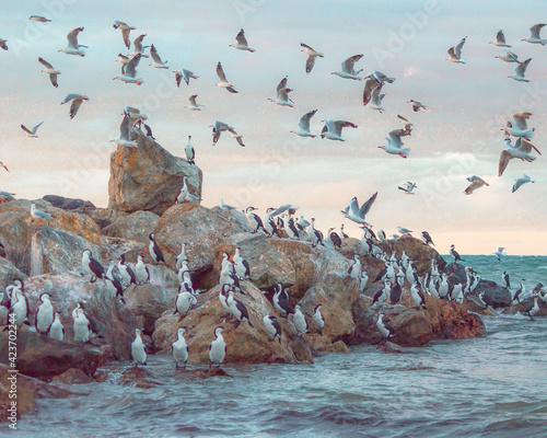 Fotografia, Obraz Birds on the beach