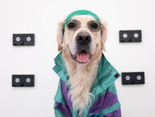 Stylish Dog In A 90s Blazer And Videotape. Portrait Of A Golden Retriever With Glasses Against A White Wall. Fashion Trends, Street Look. Let's Go Back To The 90s 80s.