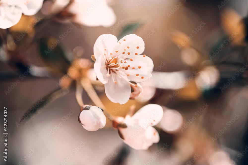 Fototapeta Wiosna w ogrodzie - obraz na płótnie