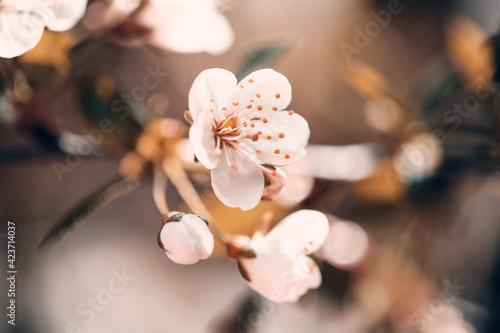 Fototapeta Wiosna w ogrodzie obraz na płótnie