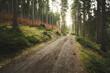 canvas print picture - schöner Pfad im Wald