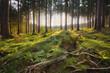 canvas print picture - Wunderschönes sonniges Waldstück