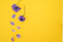 Violet Flowers With Copy Space On Yellow. Flat Lay.