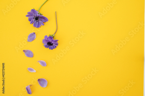 Papel de parede Violet flowers with copy space on yellow. Flat lay.