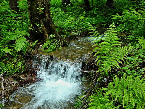 Canvas Czech Republic-view of the brook in forest