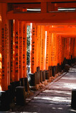 Japan Torii tunnel a place full of color and spiritual vibe