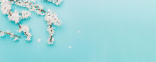 April Floral Nature. Spring Blossom And May Flowers On Blue. For Banner, Branches Of Blossoming Cherry Against Background. Dreamy Romantic Image, Landscape Panorama, Copy Space.