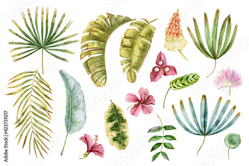 Fototapeta Watercolor tropical leaves and flowers collection