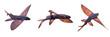 flying fish, set of Exocoetidae isolated on white background