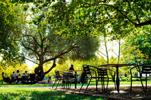 Tables And Chairs Under Oak Tree