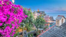 Fleurs De Bougainvilliers Au Port De Vernazza, Vue Depuis Le Sentier De Randonnée, Village Des Cinque Terre Inscrit Au Patrimoine Mondial De L'Unesco. Village Coloré D'Italie