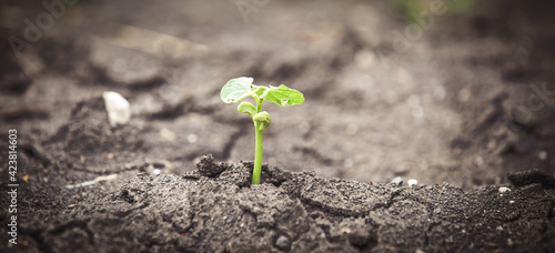 Sprout from drought climate change background Fotobehang
