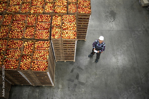 Fototapeta Top view of worker standing by apple fruit crates in organic food factory warehouse. obraz