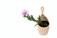 Cactus And Succulent In Crochet Hanging Planter Isolated On White Background.