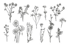 Hand Drawn Wild Flowers Isolated Vector Illustration Set. Engraved Daisy, Poppy, Clover And Bluebell Vintage Sketch. Wildflowers And Field Herbs Concept