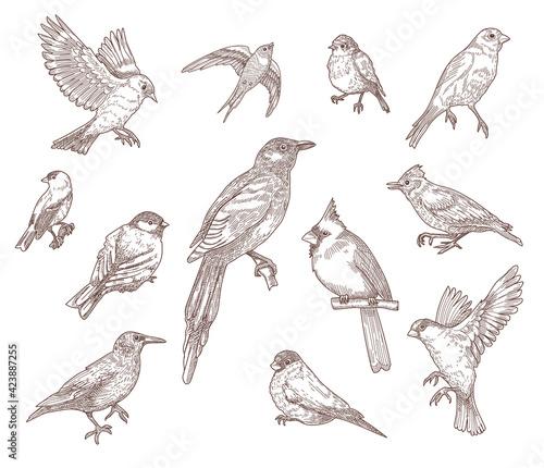 Obraz na plátne Set of bird species engraved sketches vector illustration