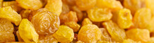 Close Up Raisins Dried Grapes Banner Panoramic: Organic Food Concept