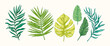 Collection of green tropical leaves and plants isolated on white background. Vector Hand Drawn Sketch Botanical Illustration. Highly detailed plant collection. Palm leaves. Exotic. Vintage. Colorful