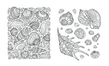 Seashell Pattern. Sea Shell Border, Clipart. Vector Illustration. Zentangle, Zen Art. Coloring Book Page For Adult. Hand Drawn Artwork. Black And White. Bohemian Ethnic Concept