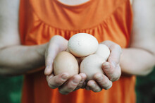 Chicken Eggs In The Hands Of A Woman. Chicken Eggs Have A Positive Effect On The Condition Of Teeth, Nails And Hair. Selective Focus.