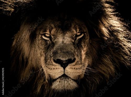 Fotografia lion in the night