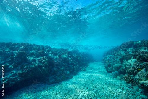Fotografie, Obraz underwater scene with coral reef
