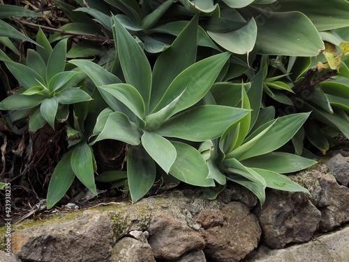 Una planta de hojas verdes en un bosque