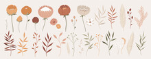 Big Collection Of Floral Elements With Hand Drawn Outline. Vector Illustration Chamomile, Poppy, Pussy Willow, Leaves And Branches In Pastel Colors. Tender Flowers For Your Design.