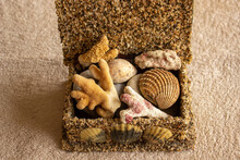 Collage Of Seashells In A Box
