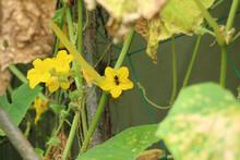 Honey Bee Photo In Natural Pumpkin Flower