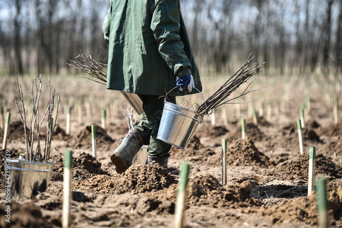 Foto Planting trees on arid soil to fight against desertification
