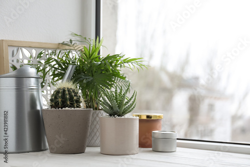 Beautiful Aloe, Cactus, Chamaedorea in pots with watering can and decor on white wooden windowsill. Different house plants