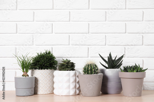 Fototapeta Different house plants in pots on wooden table near white brick wall, space for text obraz