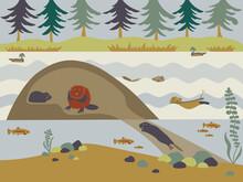 Rewilding Beavers